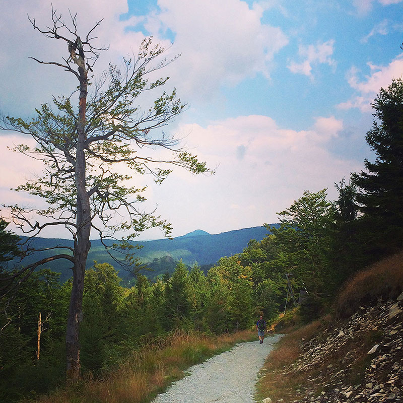 Zum großen Teil wandern wir im Lausitzer Gebirge auf gut markierten und ausgebauten Waldwegen. Und hin und wieder auch auf dem E3.