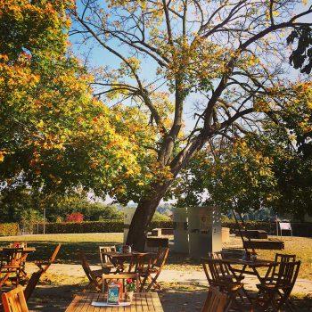 Inmitten des Burghofes gibt es Kaffee und Kuchen unter herbstlichen Blättern.