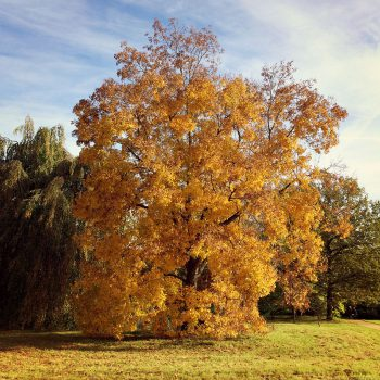 Herbstfärbung im Landschaftspark