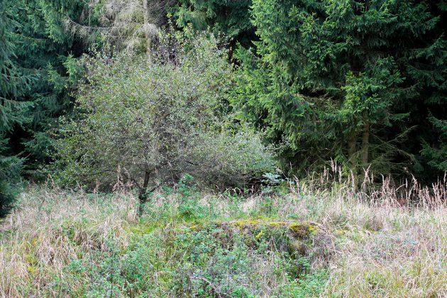 Nur die Mauerreste unterhalb des Baumes geben Aufschluss: hier stand dereinst ein ganzes Dorf.