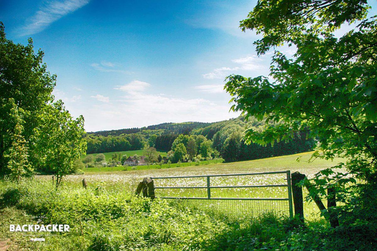 Hin und wieder wird der Wald durch Felder und Wiesen unterbrochen und verleiht damit dem Teutoburger Wald einen gewissen Reichtum an Abwechslung.