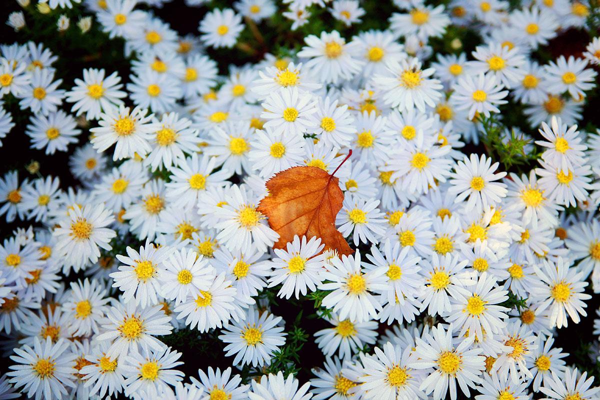 Blätter wie diese kündigen den Herbst an – Zeit zu wandern!