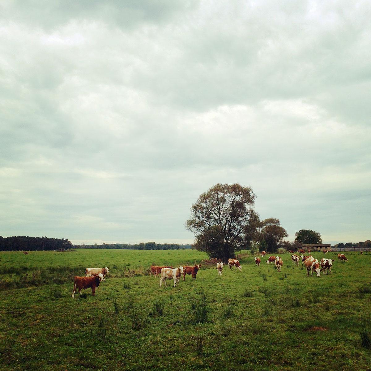 Unterwegs im Hohen Fläming: landwirtschaftliche Nutzflächen. Aber irgendwie auch schön…