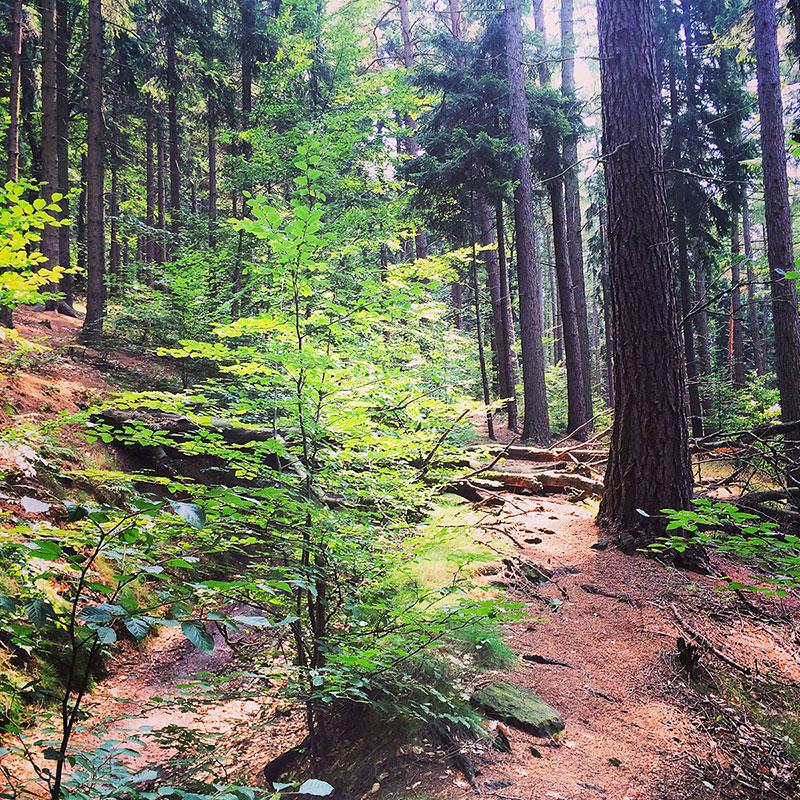 Was gibt es Schöneres, als im Sommer zu wandern? Wenn die Sonne den Boden unter dichten Bäumen wärmt, der Wald nach Pilzen und Blättern riecht, und Äste unter Stiefeln knacken? Nichts. Gar nichts.