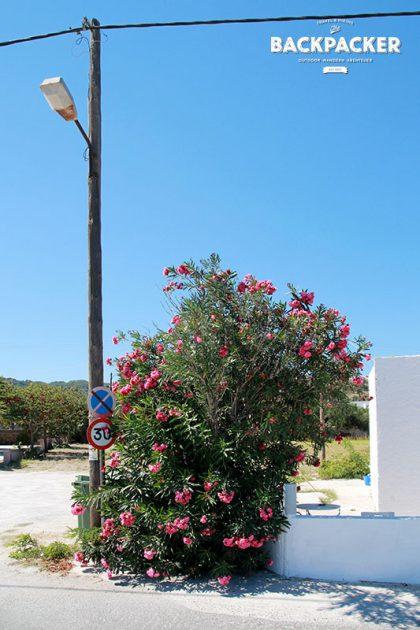 Griechisches Idyll auf Kos: irgendwo auf der Insel.