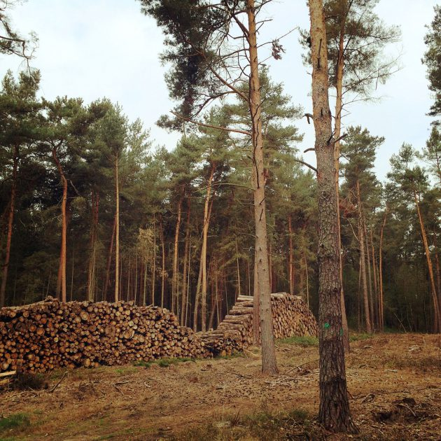 Seit einigen Jahren sind die Wölfe wieder heimisch in Brandenburger Wälder – sehr zum Ärger der Landwirte.
