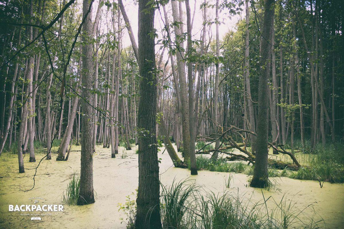 Das Moor am Pregnitzfließ