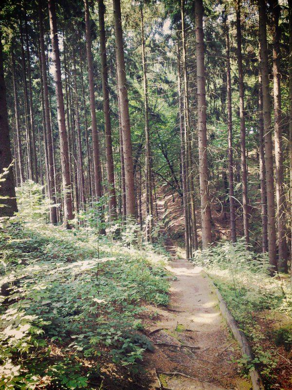 Immer wieder führt der Weg durch die Wälder des Elbsandsteingebirges. Somit ist auch an einem sonnigen Tag für ausreichend Schatten gesorgt.