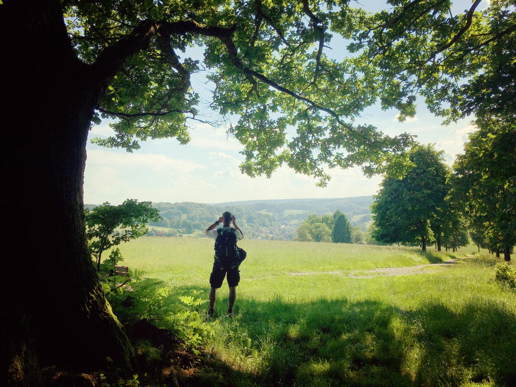 Durch den Süden des Spessarts wandert es sich gemütlich im Schatten der Bäume