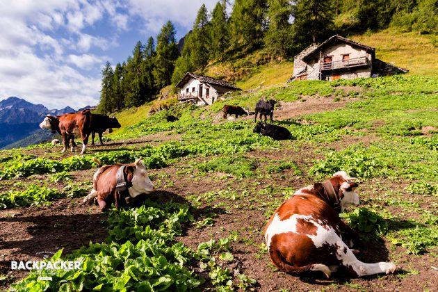 Vorbei an kleinen Viehweilern geht es hoch zum Colle Pinter.