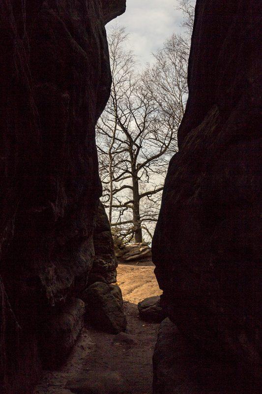 Caspar David Friedrich soll sehr viele seiner Impressionen aus dem Elbsandsteingebirge gezogen haben. Auch wenn das Gebiet zu seiner Zeit fast gänzlich unbewaldet war.