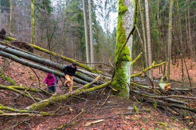 Der letzte Sturm im Januar 2018 hinterließ auch im Vessertal große Schäden. Mancherorts hilft da nur Kraxeln.