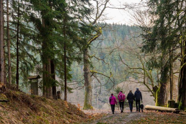 Oberhalb des Breitenbaches verläuft der Wanderweg und ist bei jung und alt beliebt.
