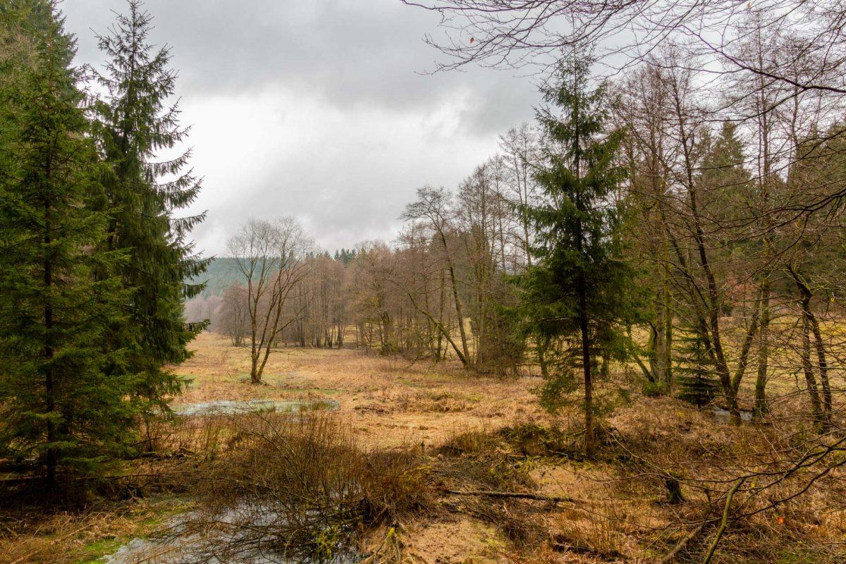 Wer am Breitenbach vom Wege abkommt wird vor allem Eines: ziemlich nass. Die Ufer sind nämlich geprägt von Feuchtwiesen und Mooren.