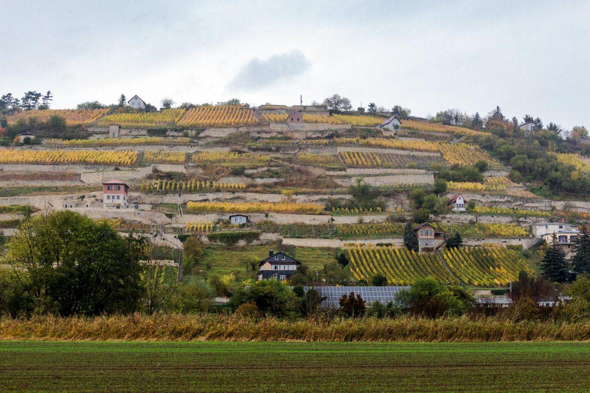 Bis zum letzten Quadratmeter ausgenutzt sind die Weinhänge an der Unstrut im Triasland bei Freyburg