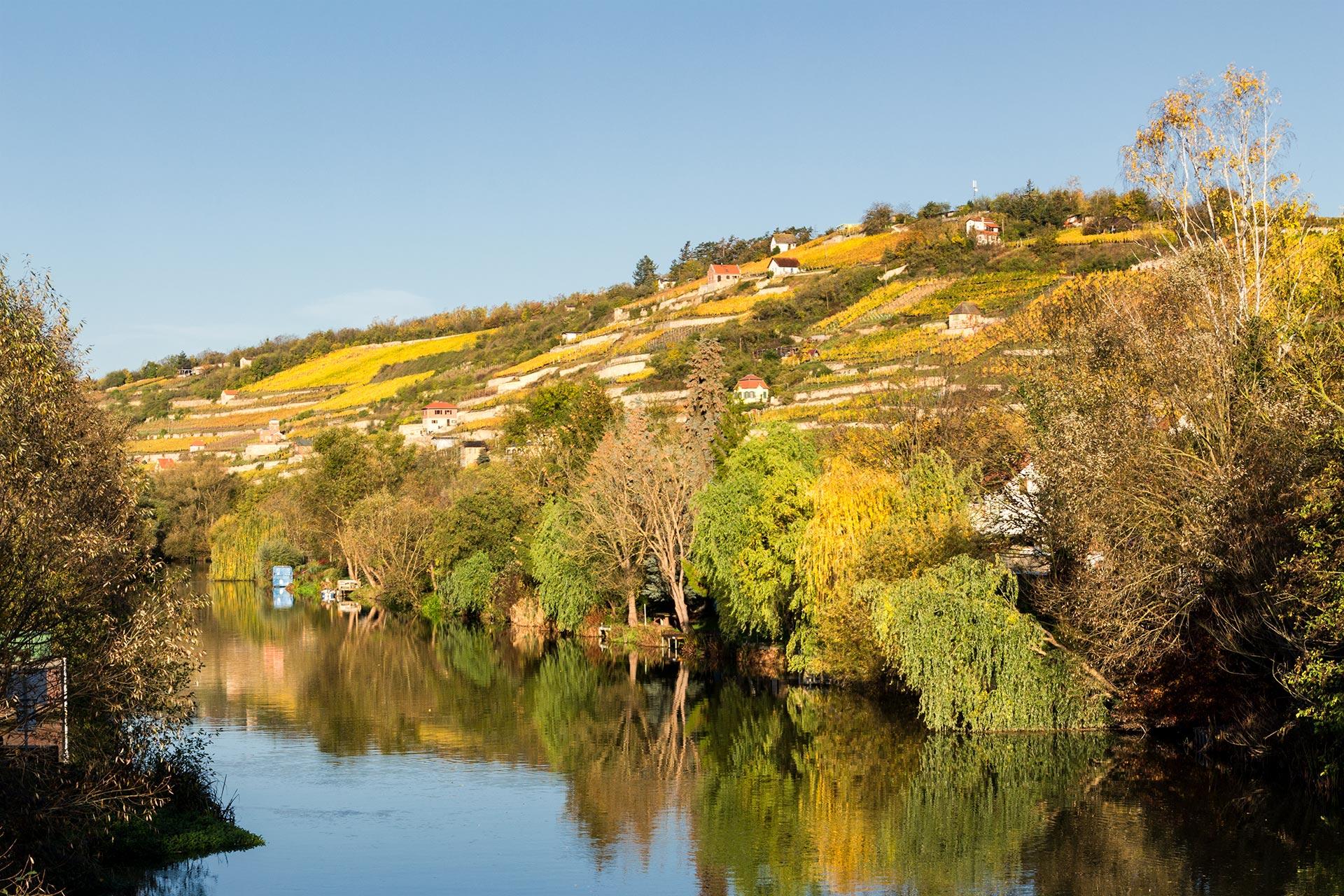Herbstliches Farbspiel an den Weinhängen bei Freyburg auf dem Weg nach Naumburg