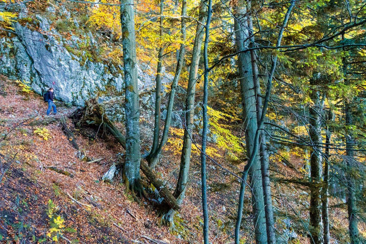 Herbst in den Chiemgauer Alpen auf dem Weg zur Kampenwand