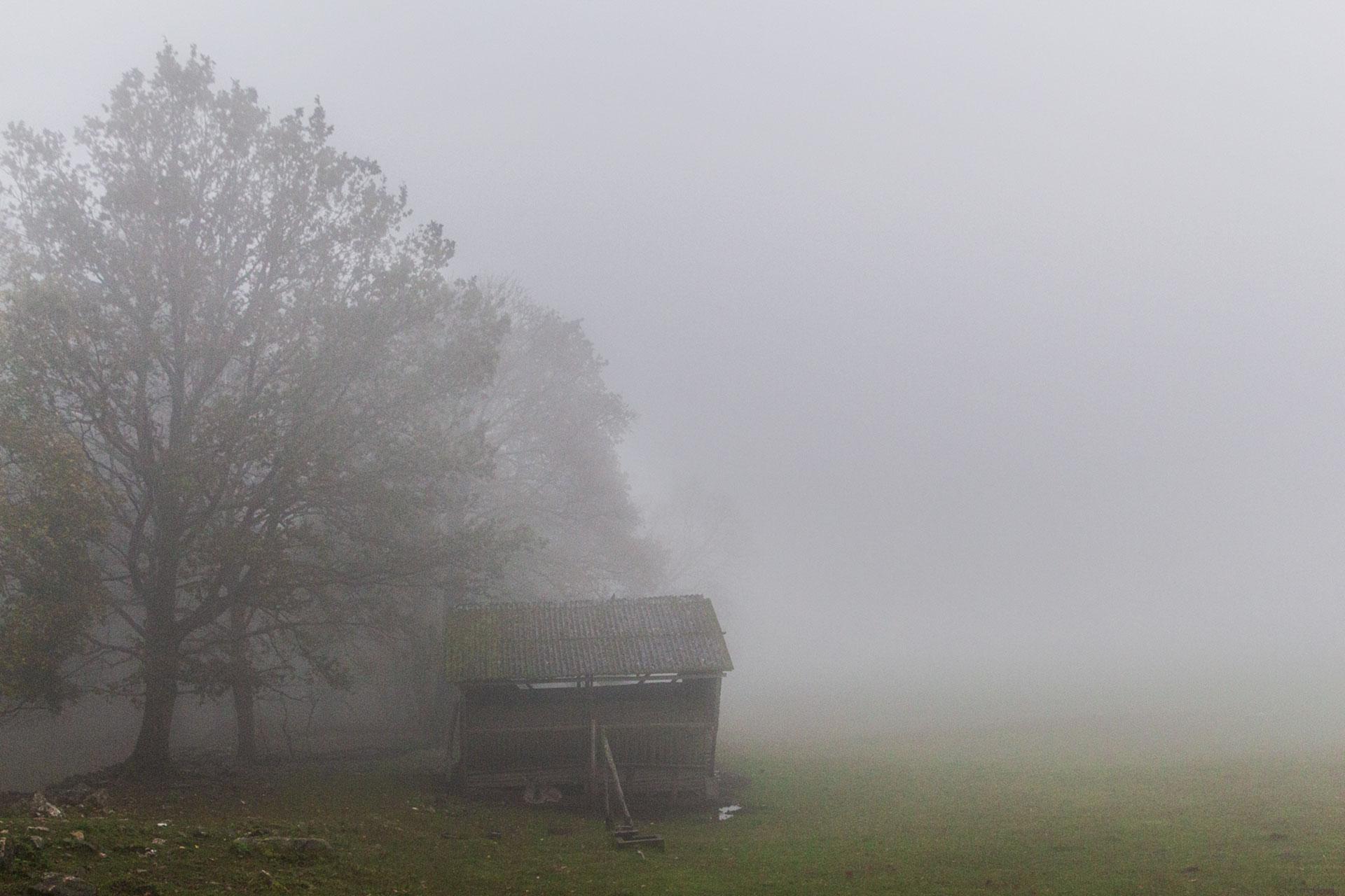 Insgesamt nichts Neues, aber trotzdem mystisch schön – am Wildgehege unterhalb der Wildenburg