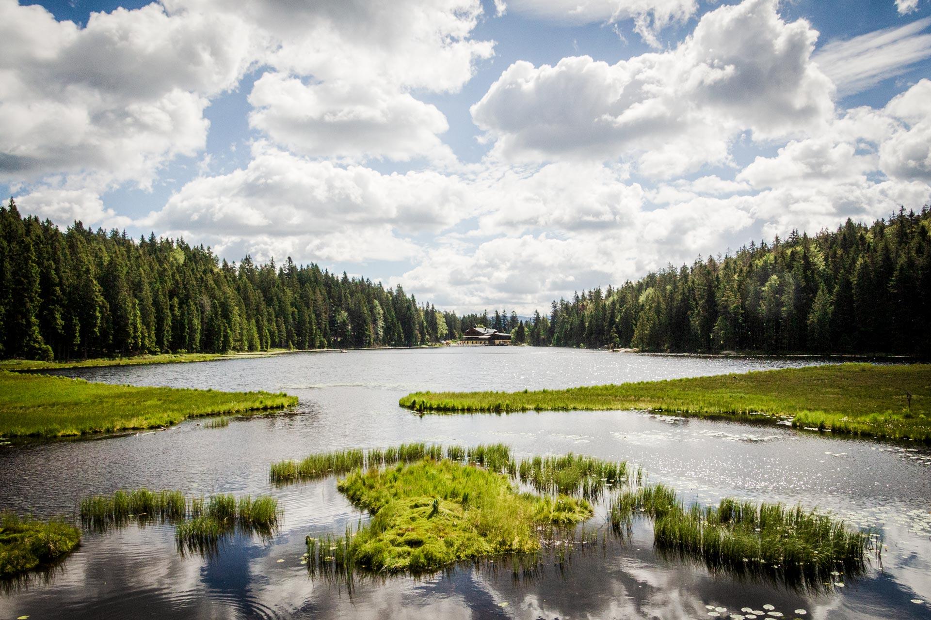 Großer Arbersee | Eine Umrundung kostet zwei Kilometer Zeit, bietet aber im Gegenzug vielerlei Eindrücke