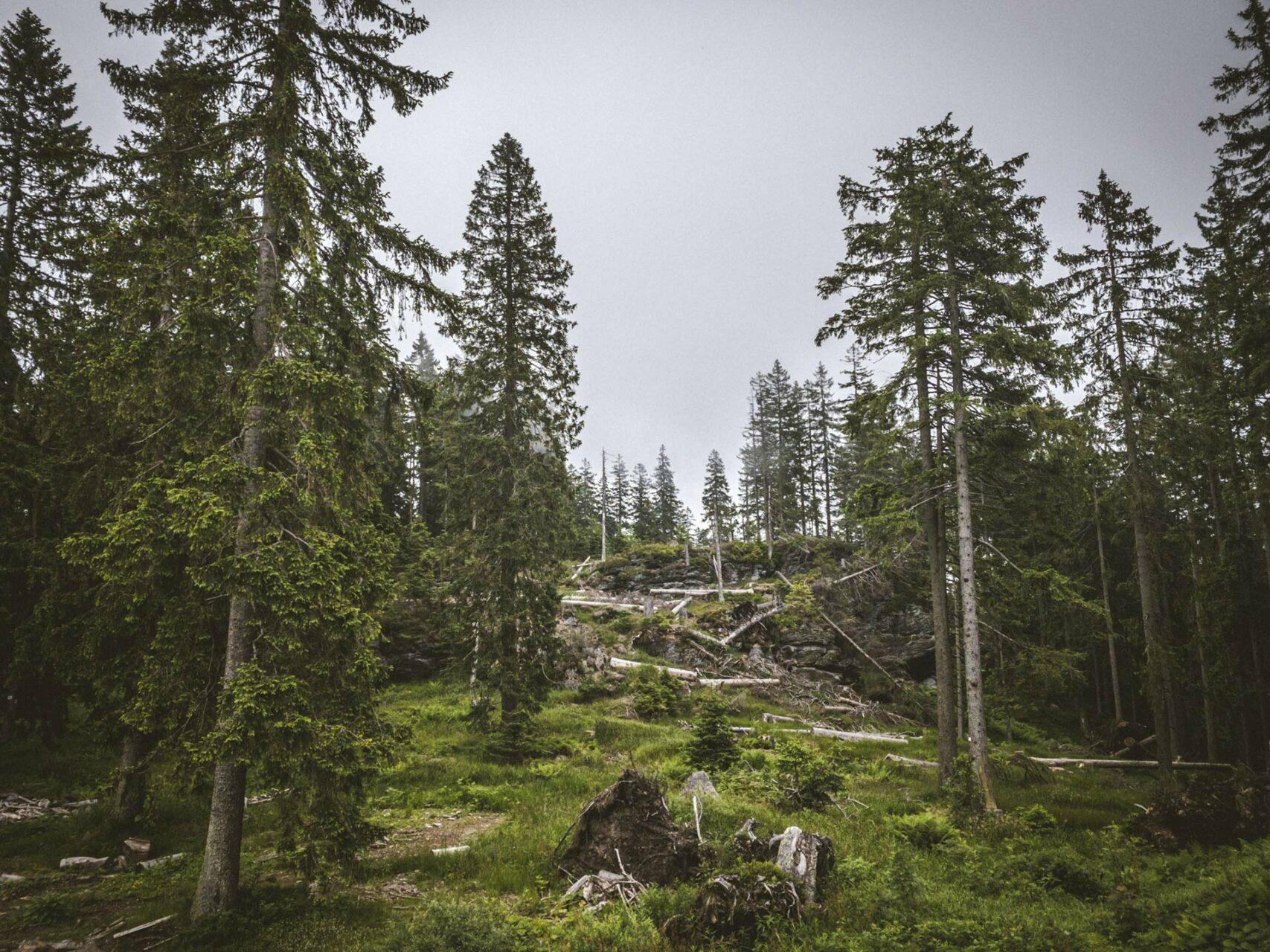 Verwunschener Wald auf dem Gipfel des Großen Falkensteins