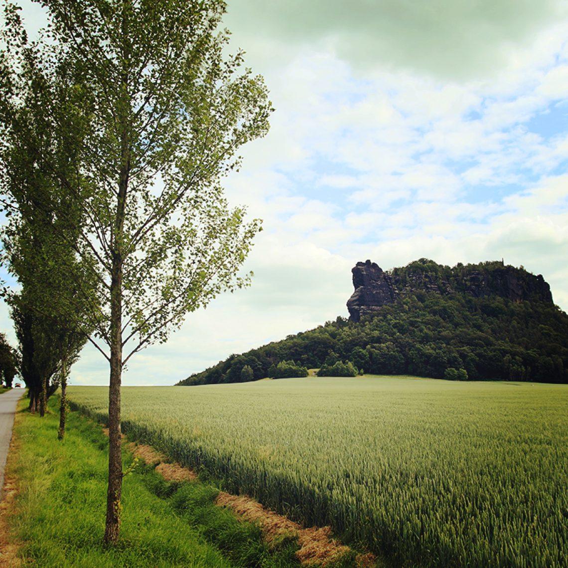 Der Lilienstein vom Fuße aus betrachtet: ein Tafelberg besonderer Güte.