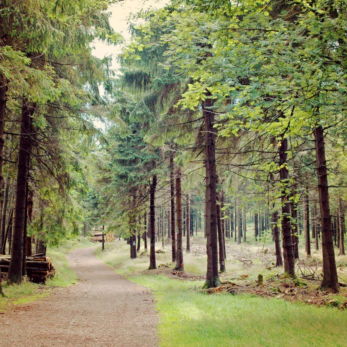 Durch die Wälder